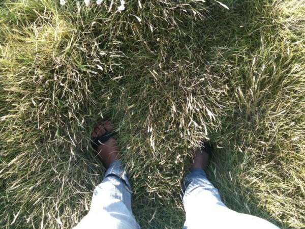 GZ fresh grass