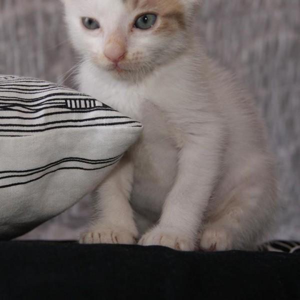kitten Marra