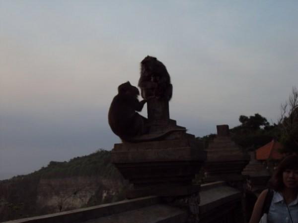 monkey speach