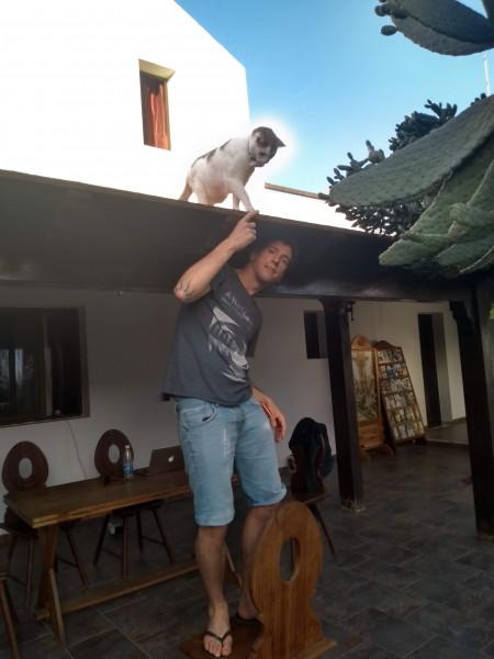 fuerte-gato